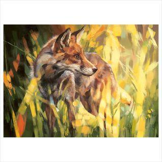 Fox In Dappled Sunlight