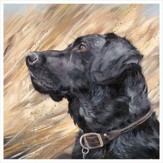 Black Labrador in Reeds - AP